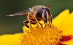 Abeja extrayendo polen