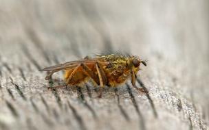 Una mosca en macro