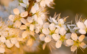 Flores blancas al atardecer