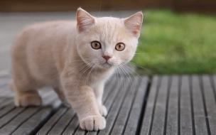 Un gato bebe