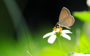 Mariposa en fondo verde