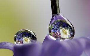 Reflejos de flores en gotas de agua
