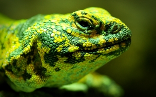 La cabeza de un lagarto