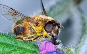 Fotos macro de abejas
