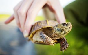 Una hermosa tortuga en la mano