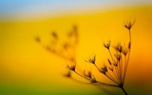 Una flor desenfocada