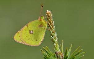 Fotografías macro de mariposas