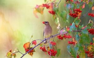 Dibujo pintado de aves