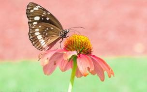 Mariposa en una flor rosada