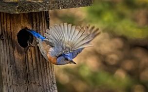 Pajaro saliendo de su nido