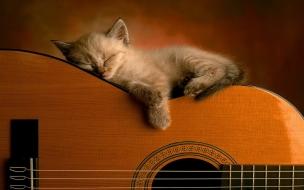 Un gato y guitarra