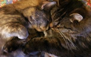 Gatitos abrazados