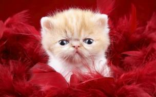 Un gatito feo