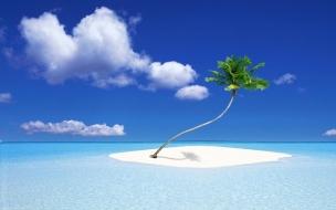 Una isla con una palmera