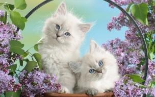 Hermosos gatos bebes