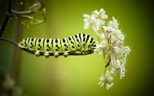Una oruga en una flor