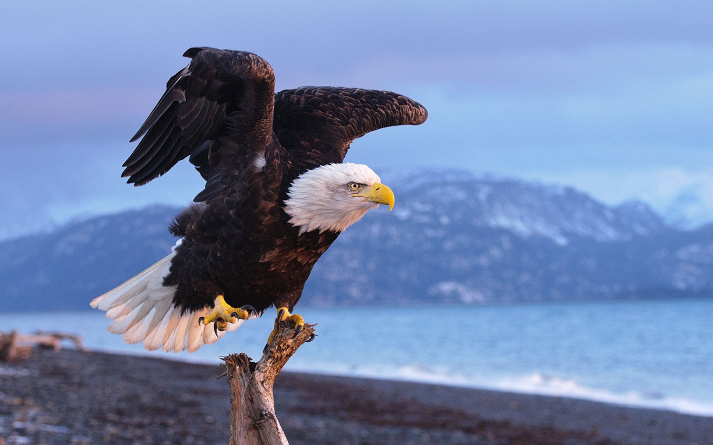 Aguila negra - 1440x900