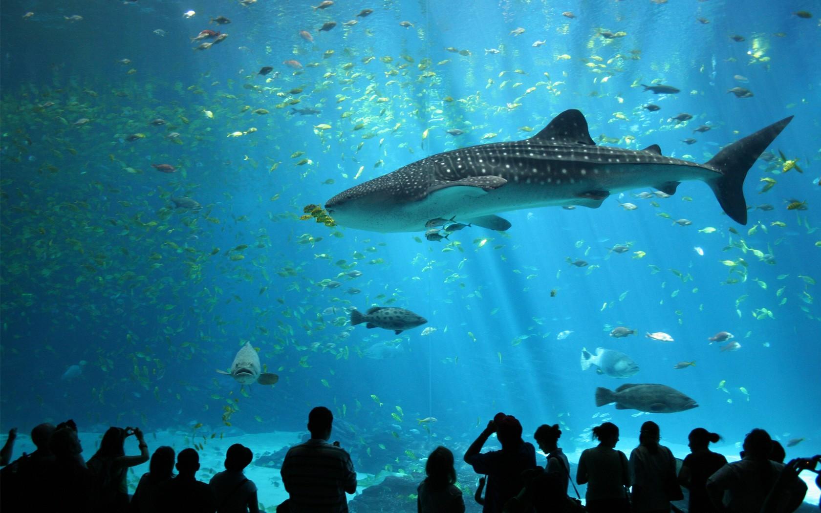 Animales marinos en acuario - 1680x1050