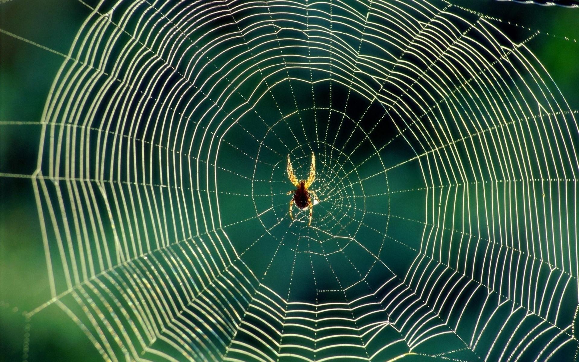 Araña y su telaraña - 1920x1200