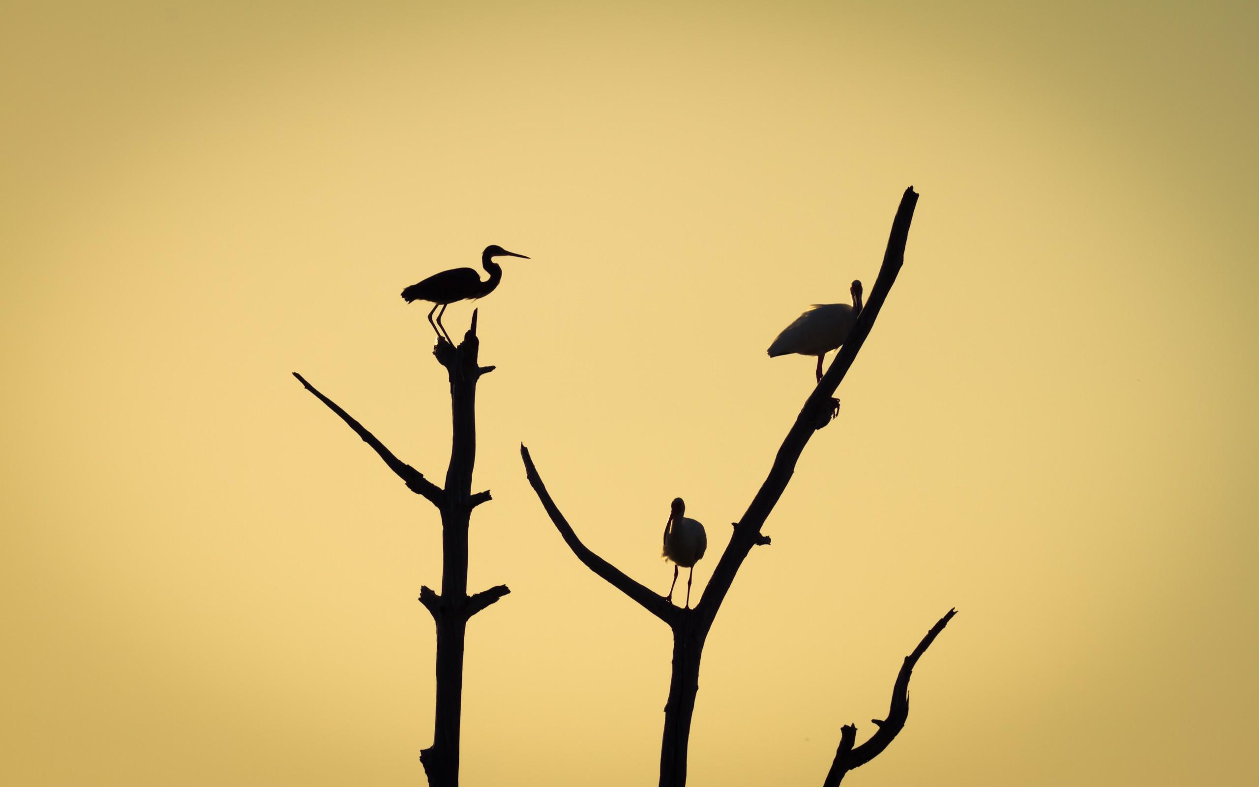 Aves en árboles - 2560x1600