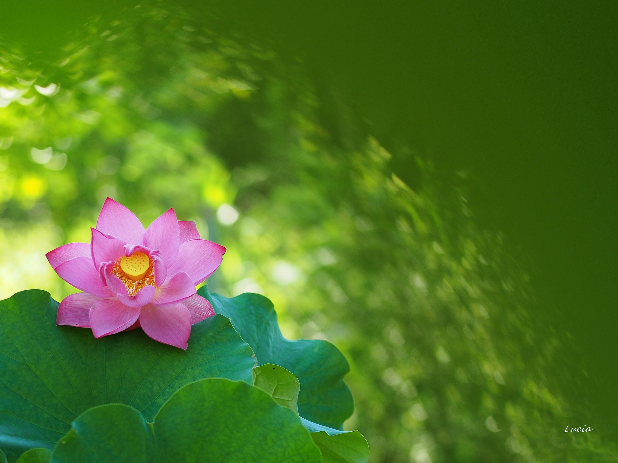 Bellas flores rosadas - 2048x1536