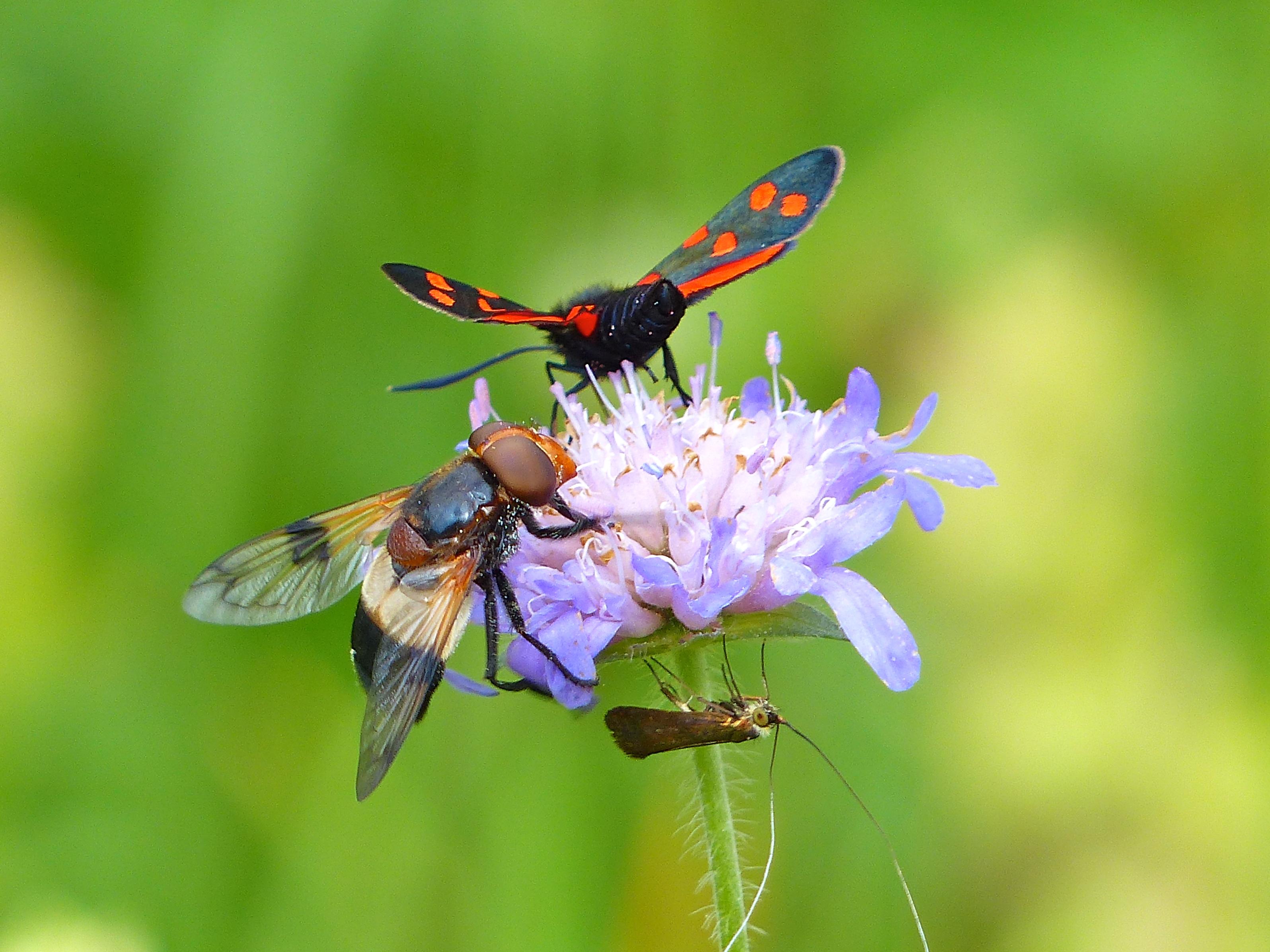 Bellas fotos macro de insectos - 3192x2394
