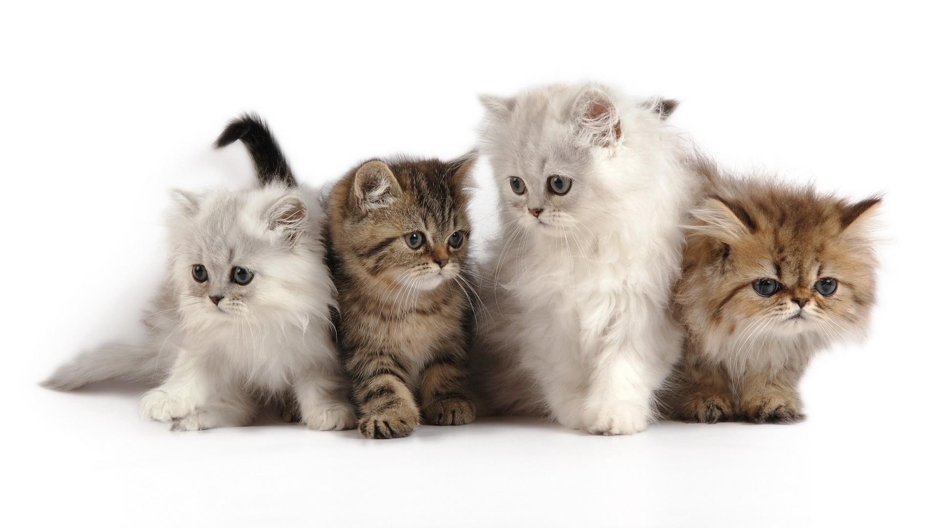 Bellos pequeños gatos - 1920x1080