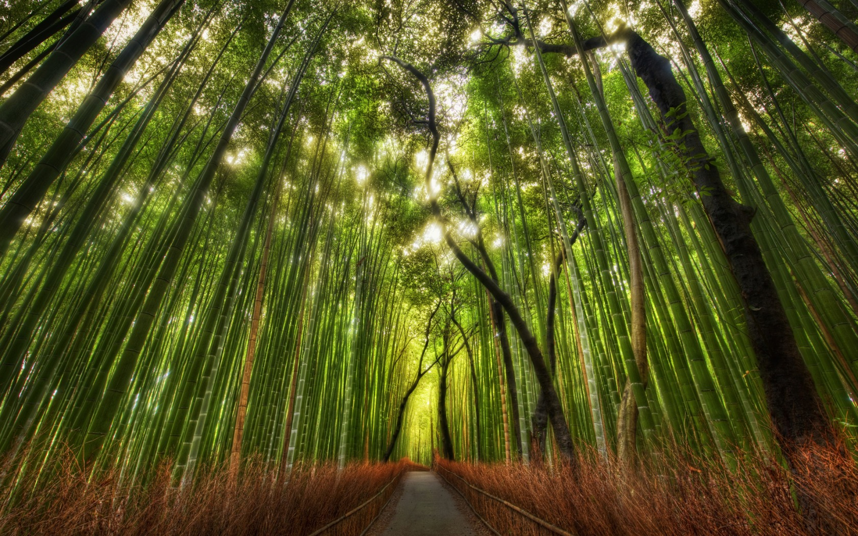 Bosque de bambu - 1680x1050