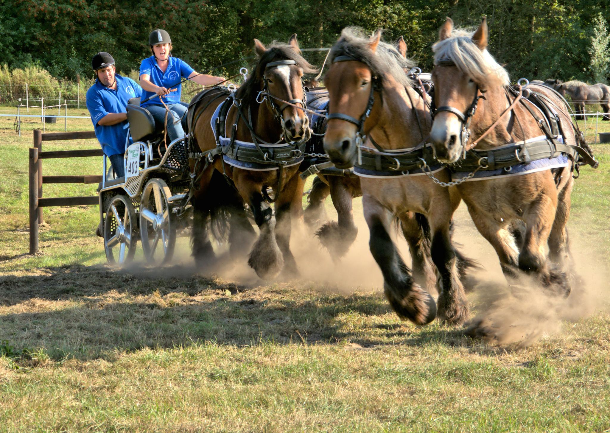 Caballos corriendo en carreras - 2048x1454