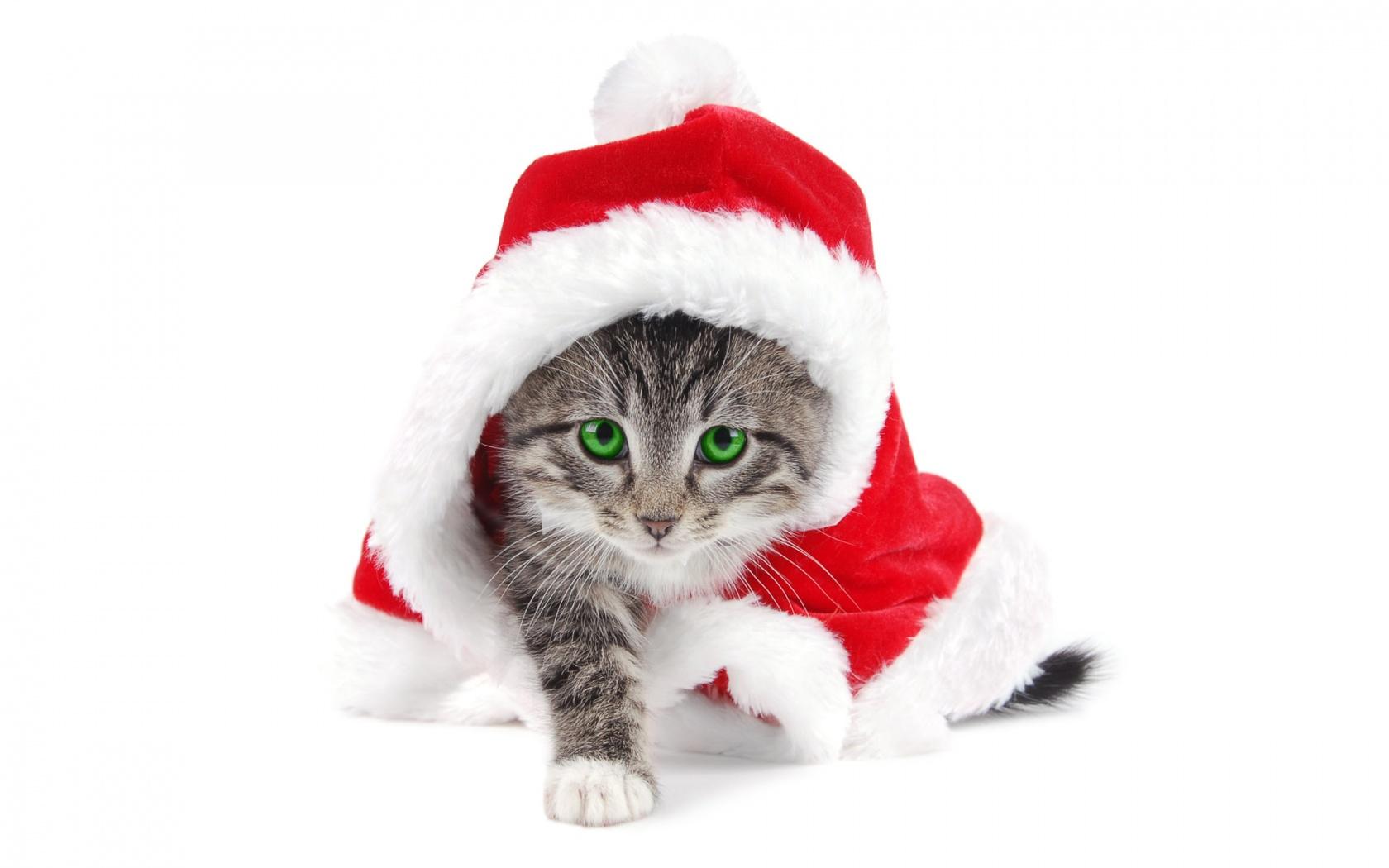El gato Santa Claus - 1680x1050