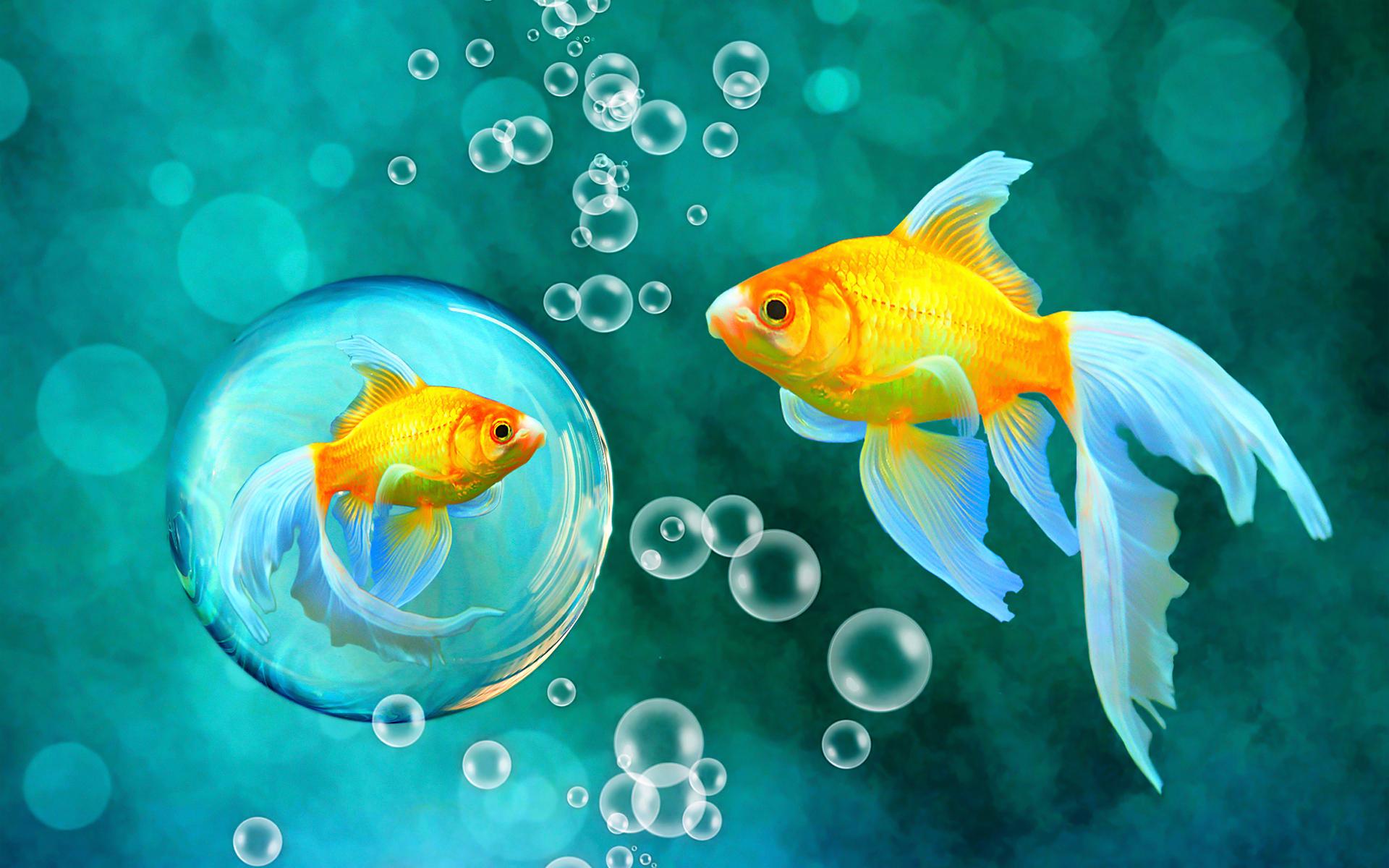 El pez dorado - 1920x1200