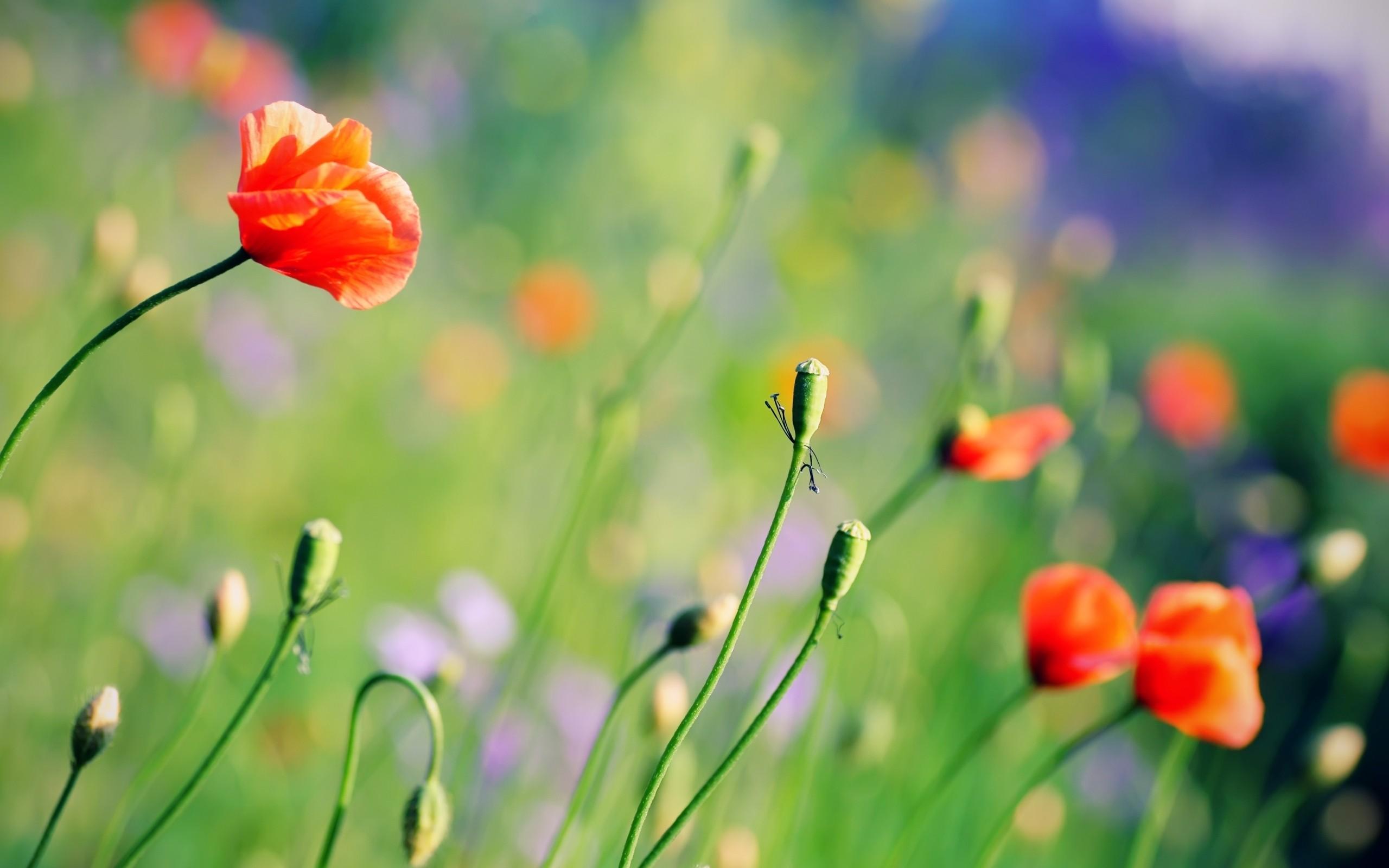 Enfoques a flores - 2560x1600