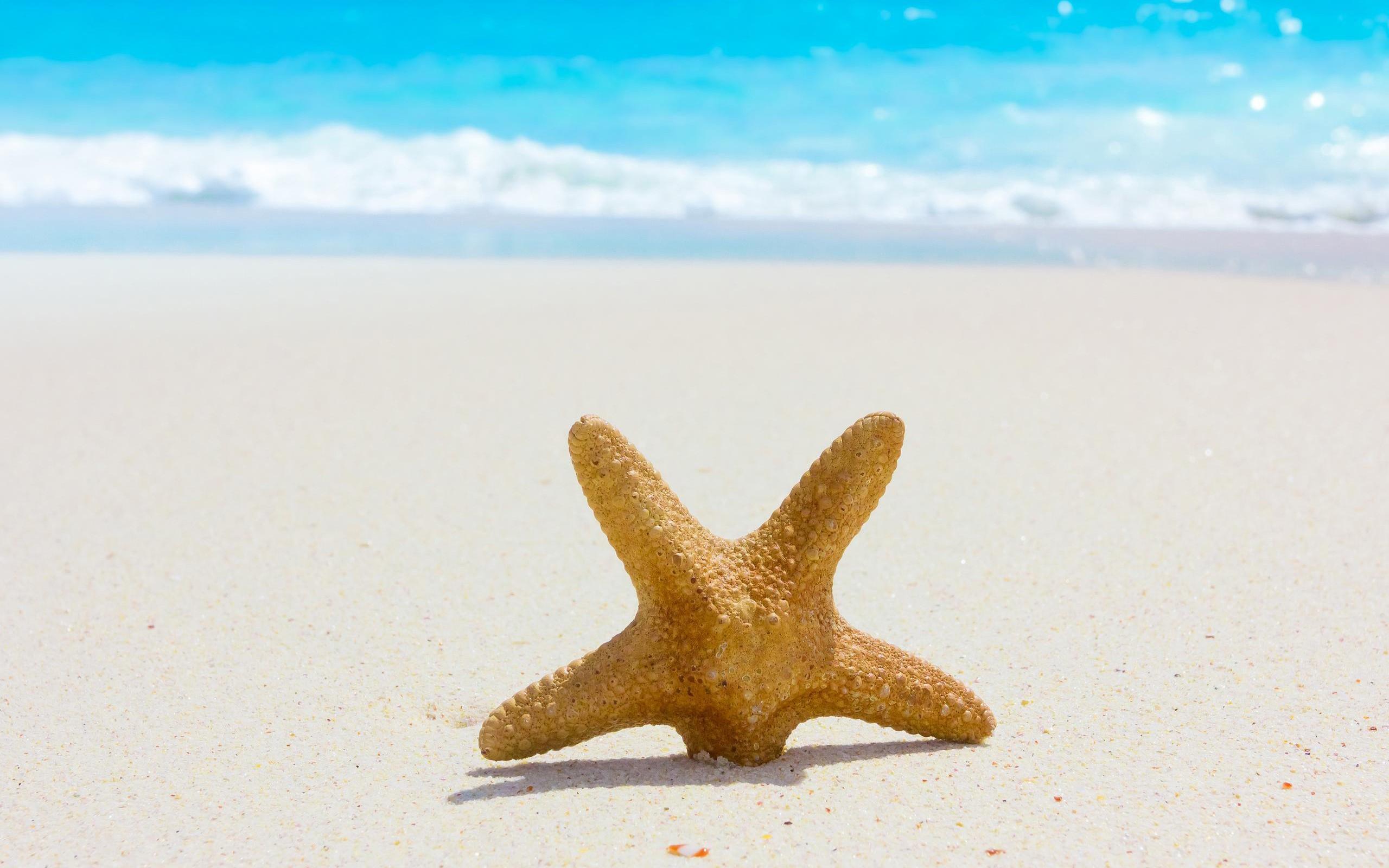 Estrella de mar en la playa - 2560x1600