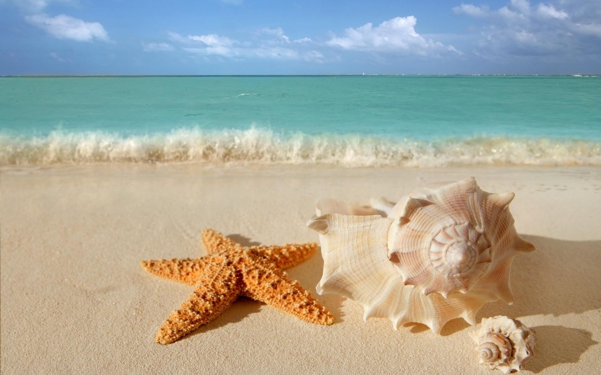 Estrella de mar y conchas - 1920x1200