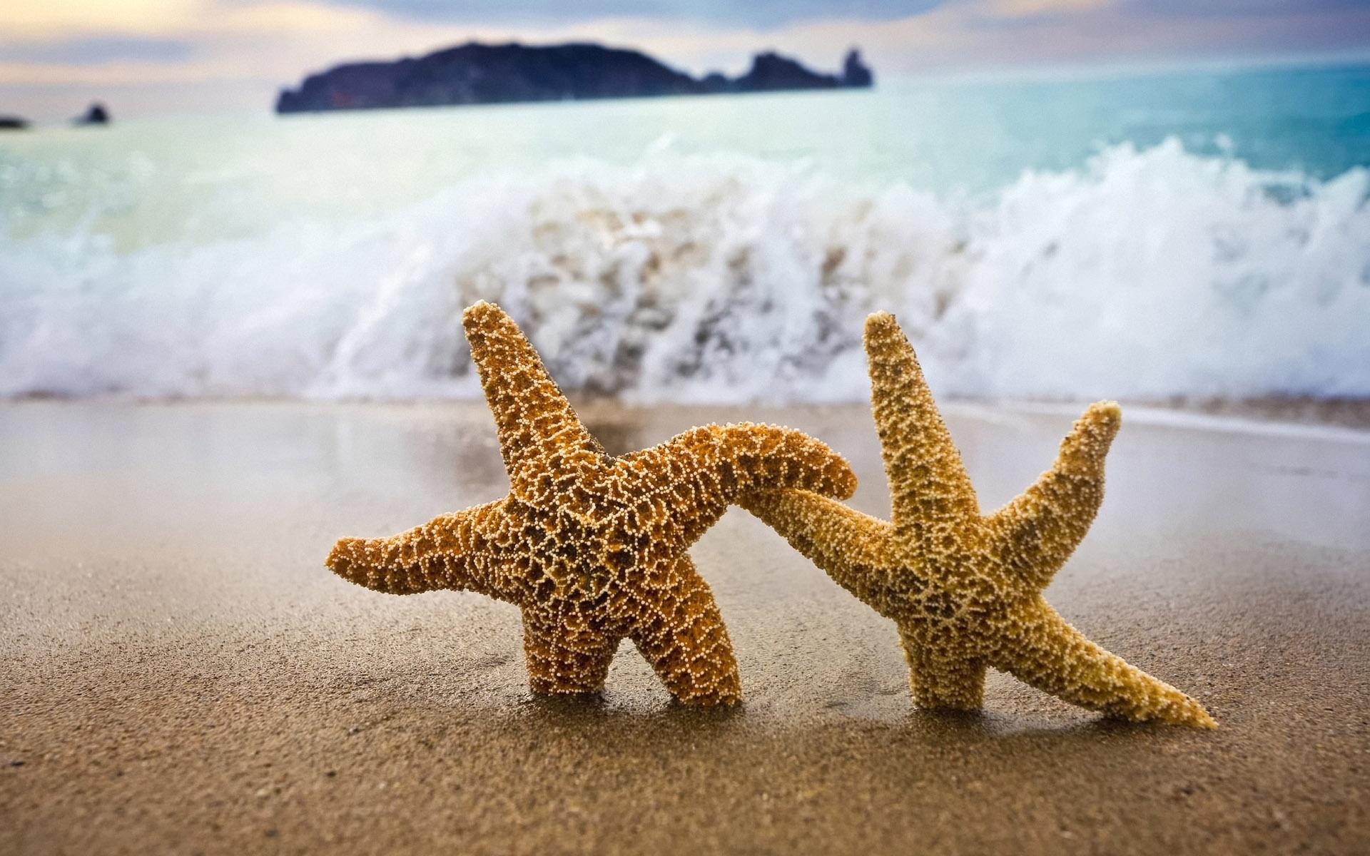 Estrellas de mar en playa - 1920x1200