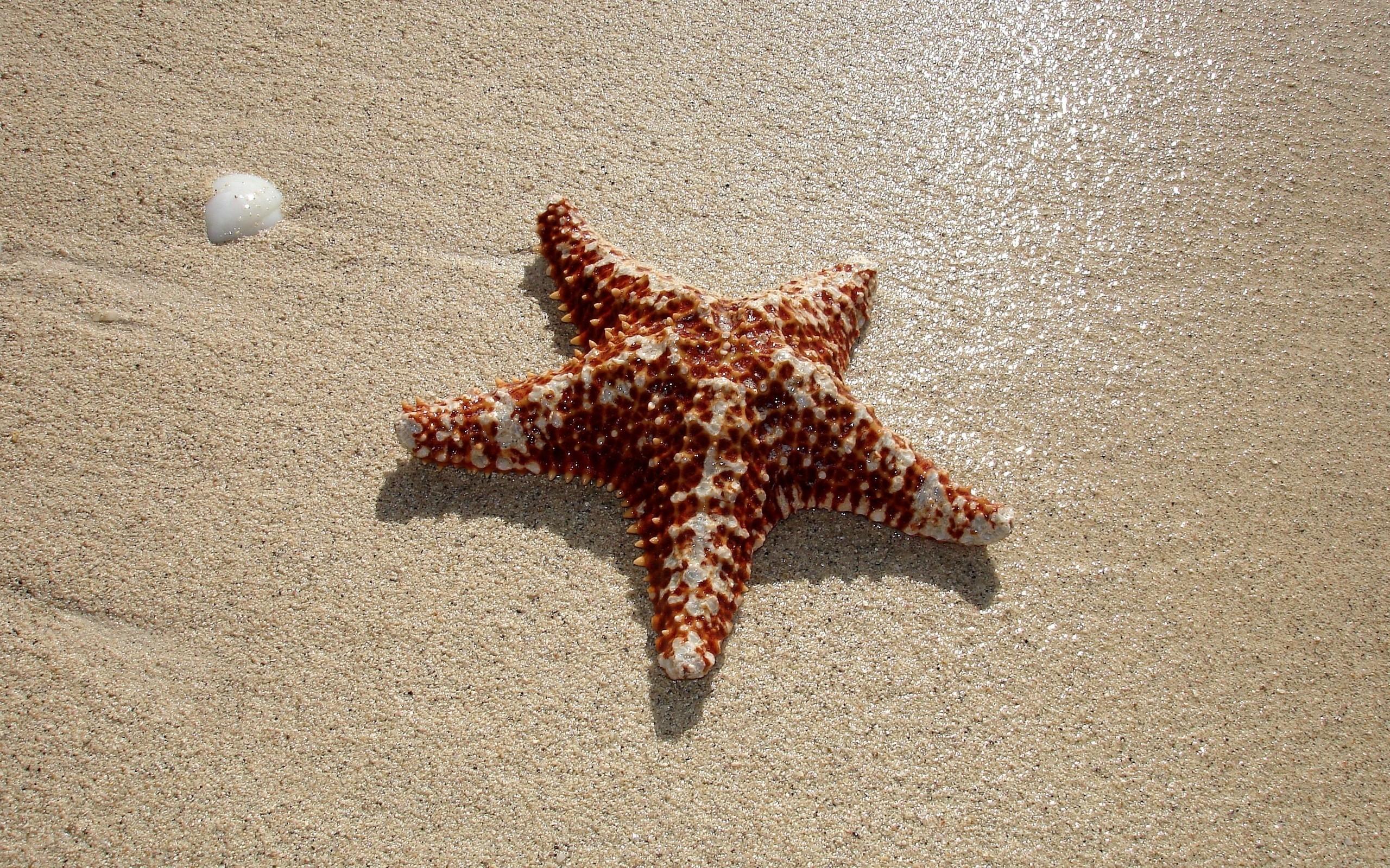 Estrellas de mar en playas - 2560x1600