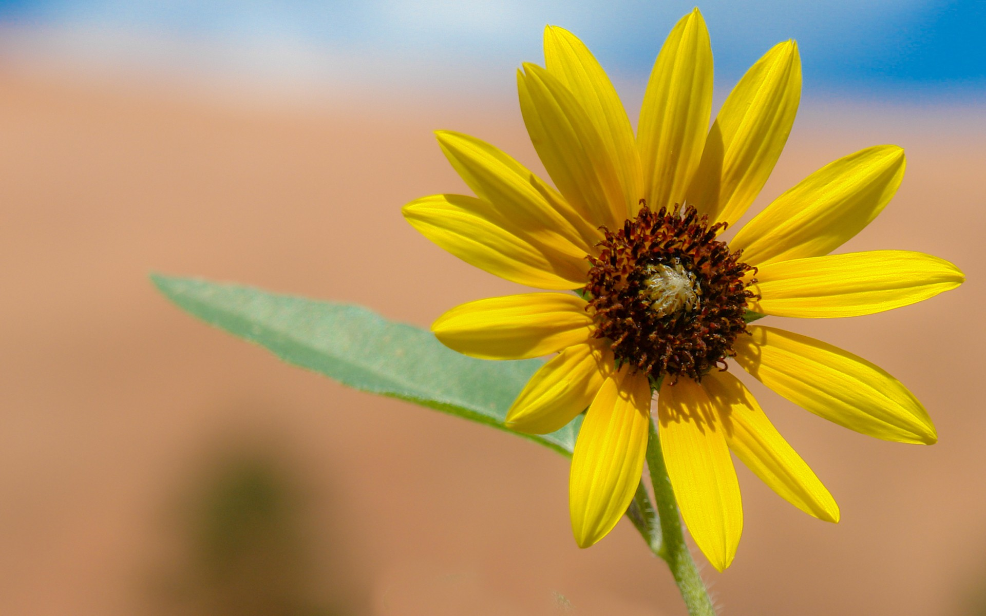 Flor amarilla en macro - 1920x1200