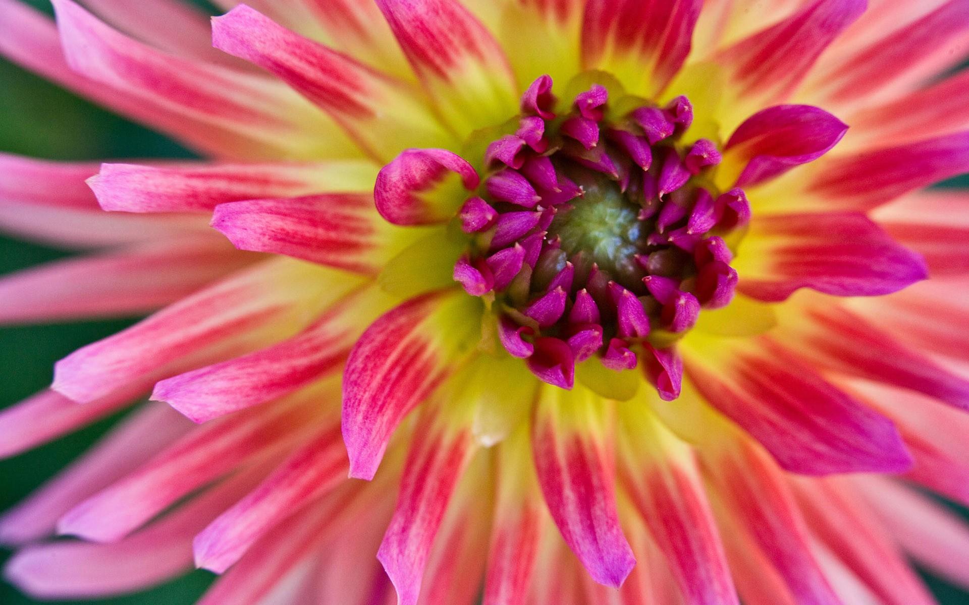 Flor de muchos colores - 1920x1200