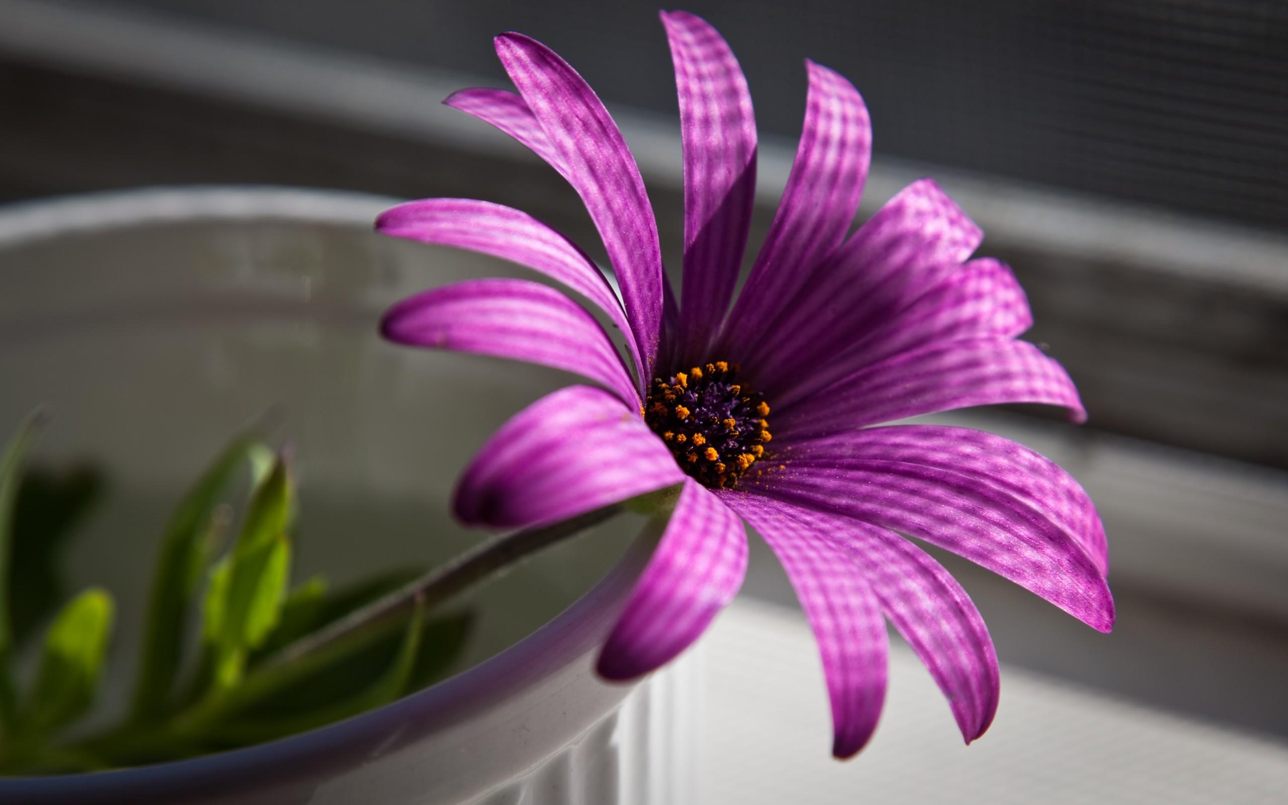 Flor purpura - 2560x1600