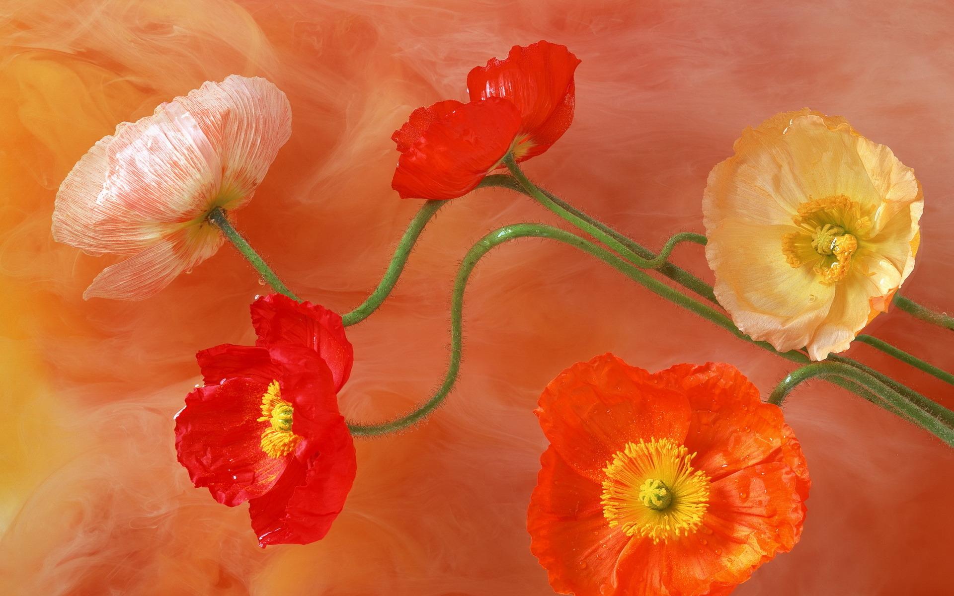 Flores artificiales - 1920x1200