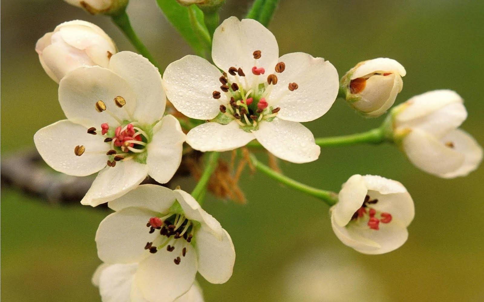 Flores blancas con pistilos - 1600x1000