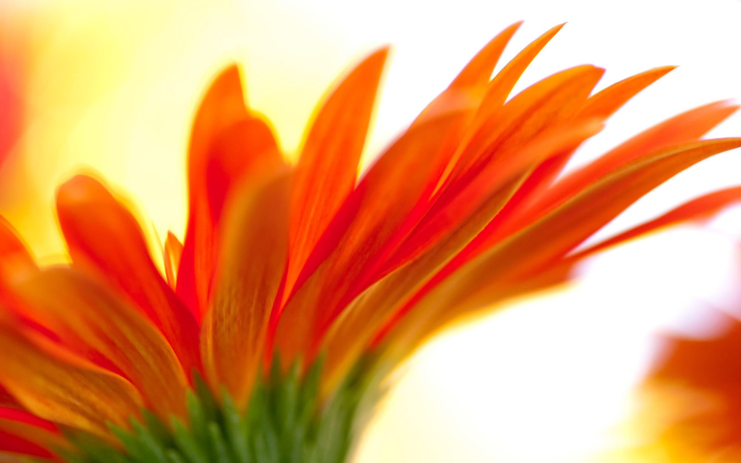 Flores con petalos naranjas - 2560x1600