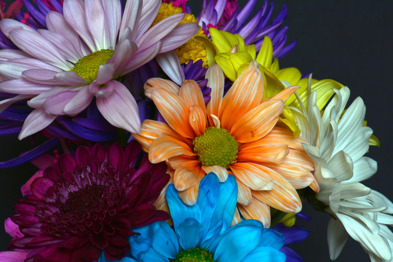 Flores de colores - 6000x4000