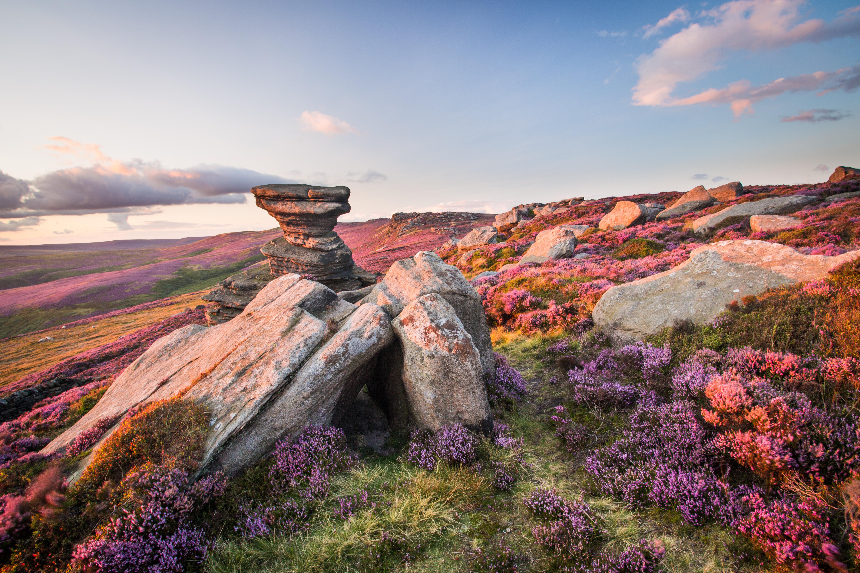 Flores de colores y rocas - 5760x3840