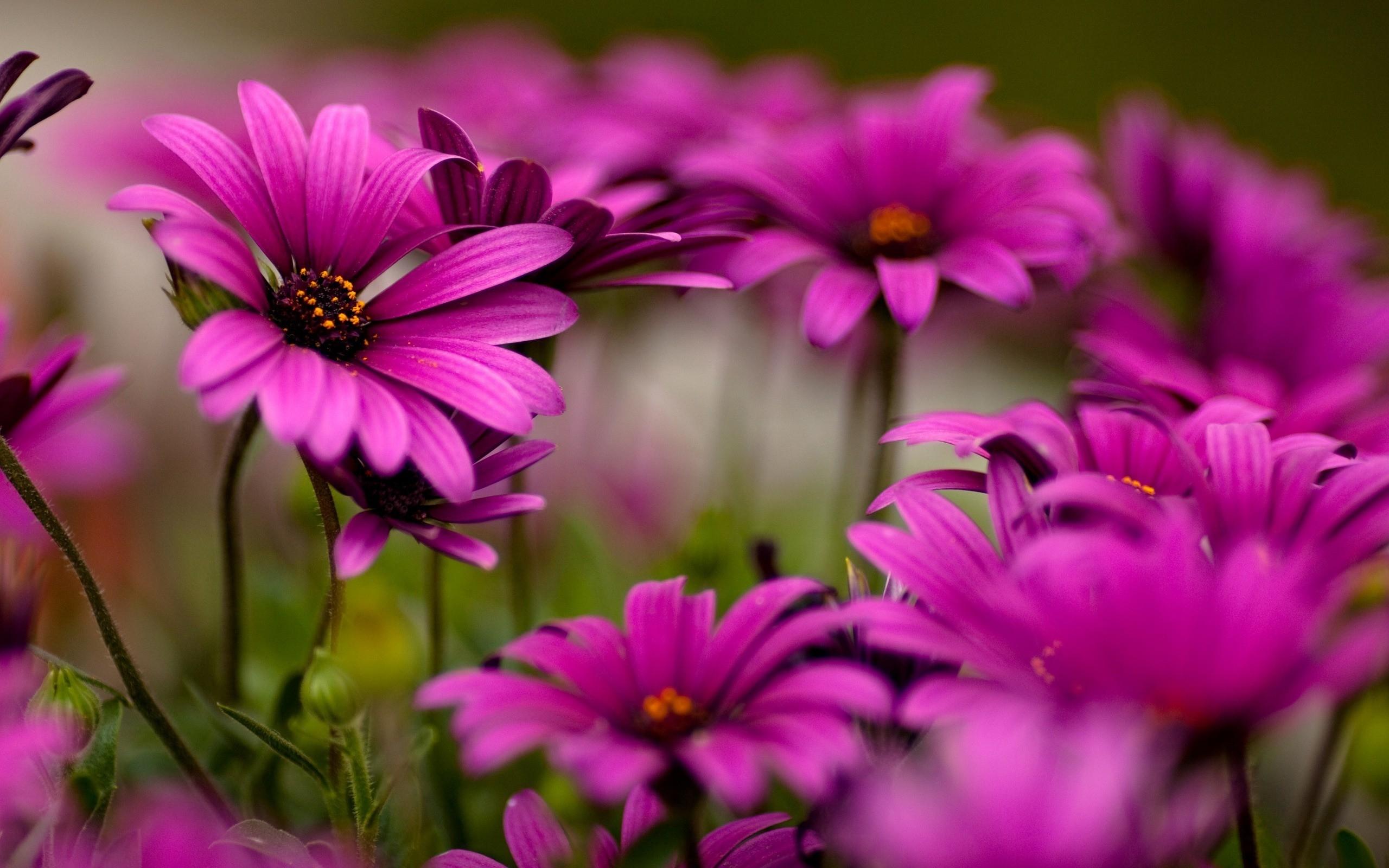 Flores moradas bellas - 2560x1600