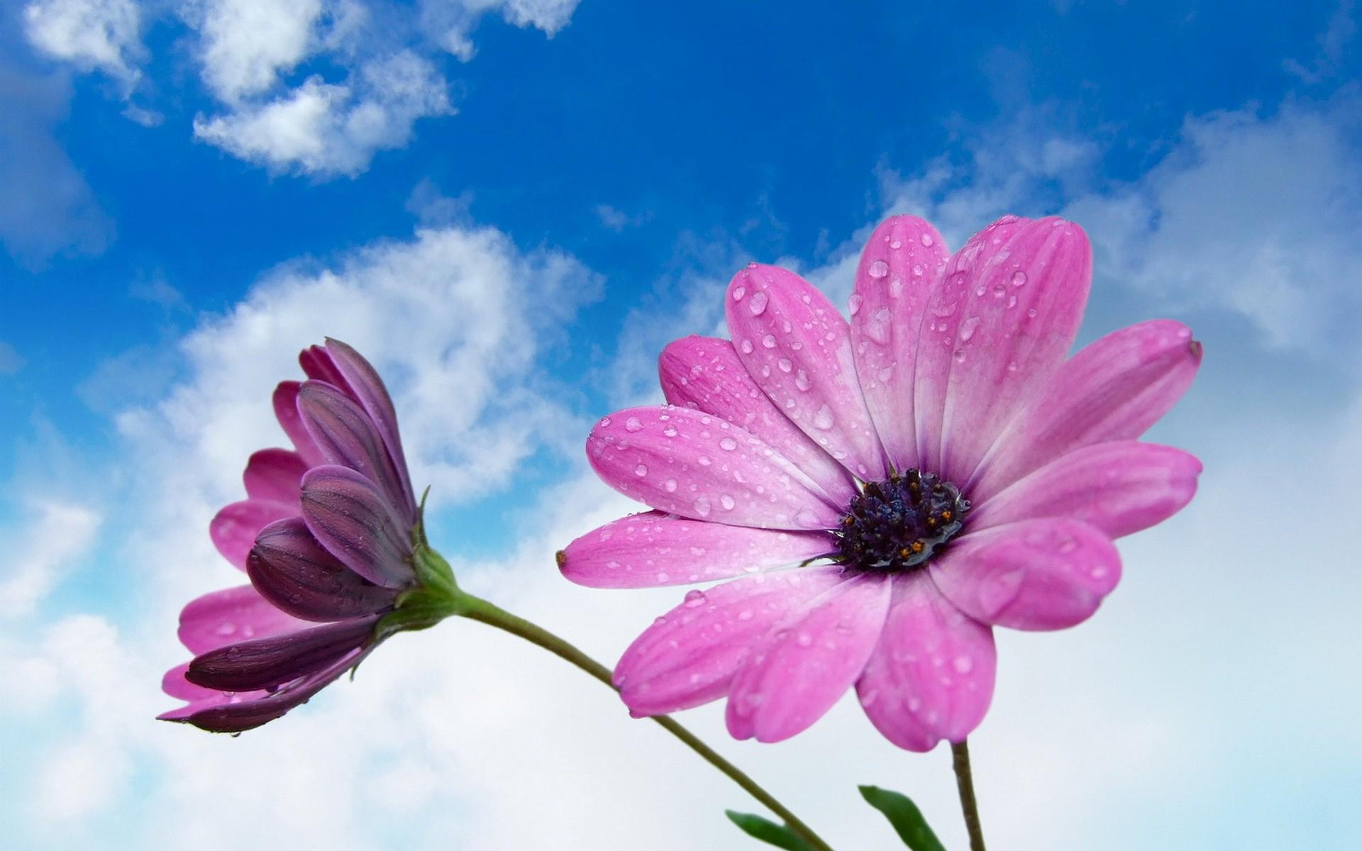 Flores moradas en macro - 1920x1200