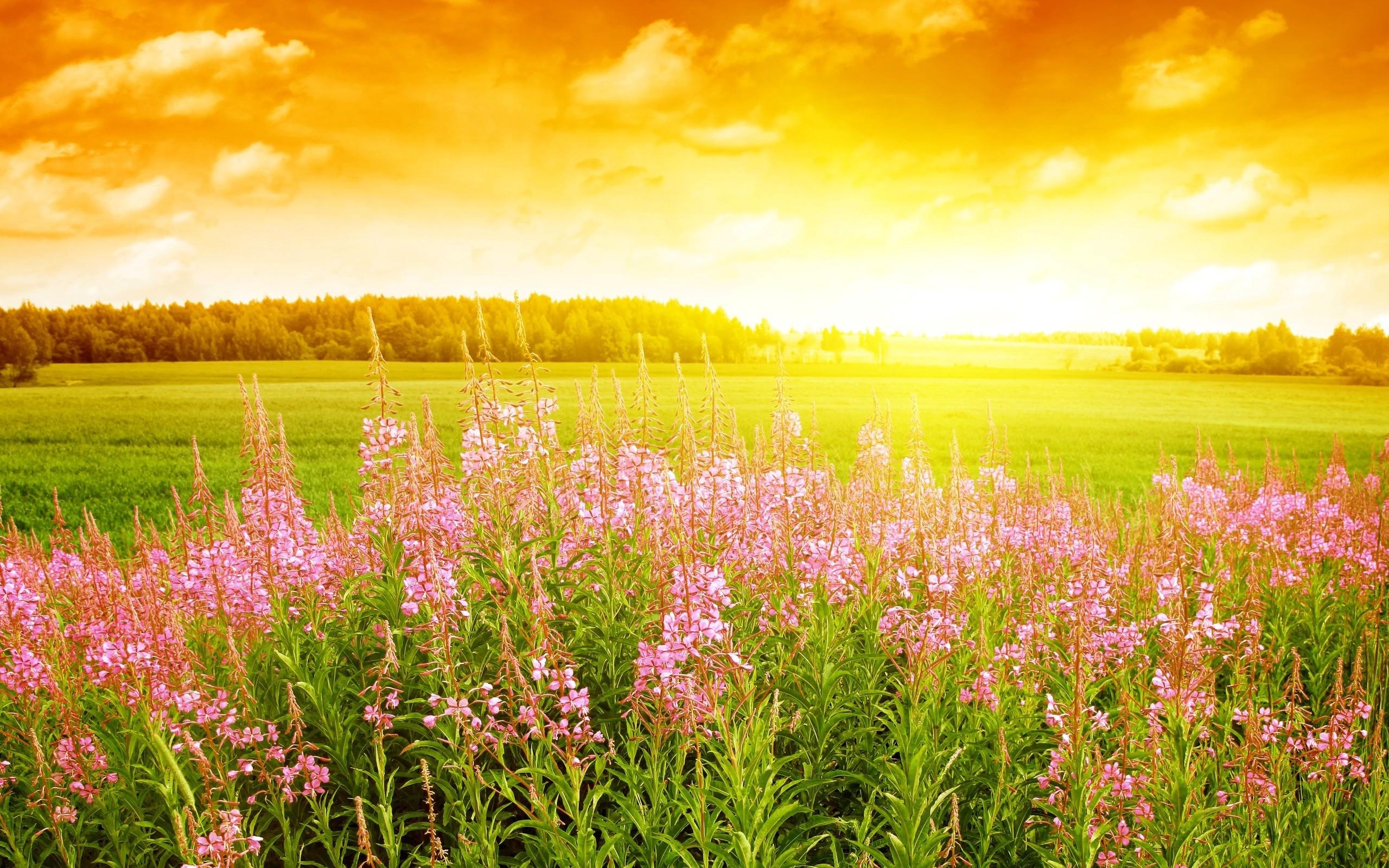 Flores rosadas en paisaje - 2560x1600