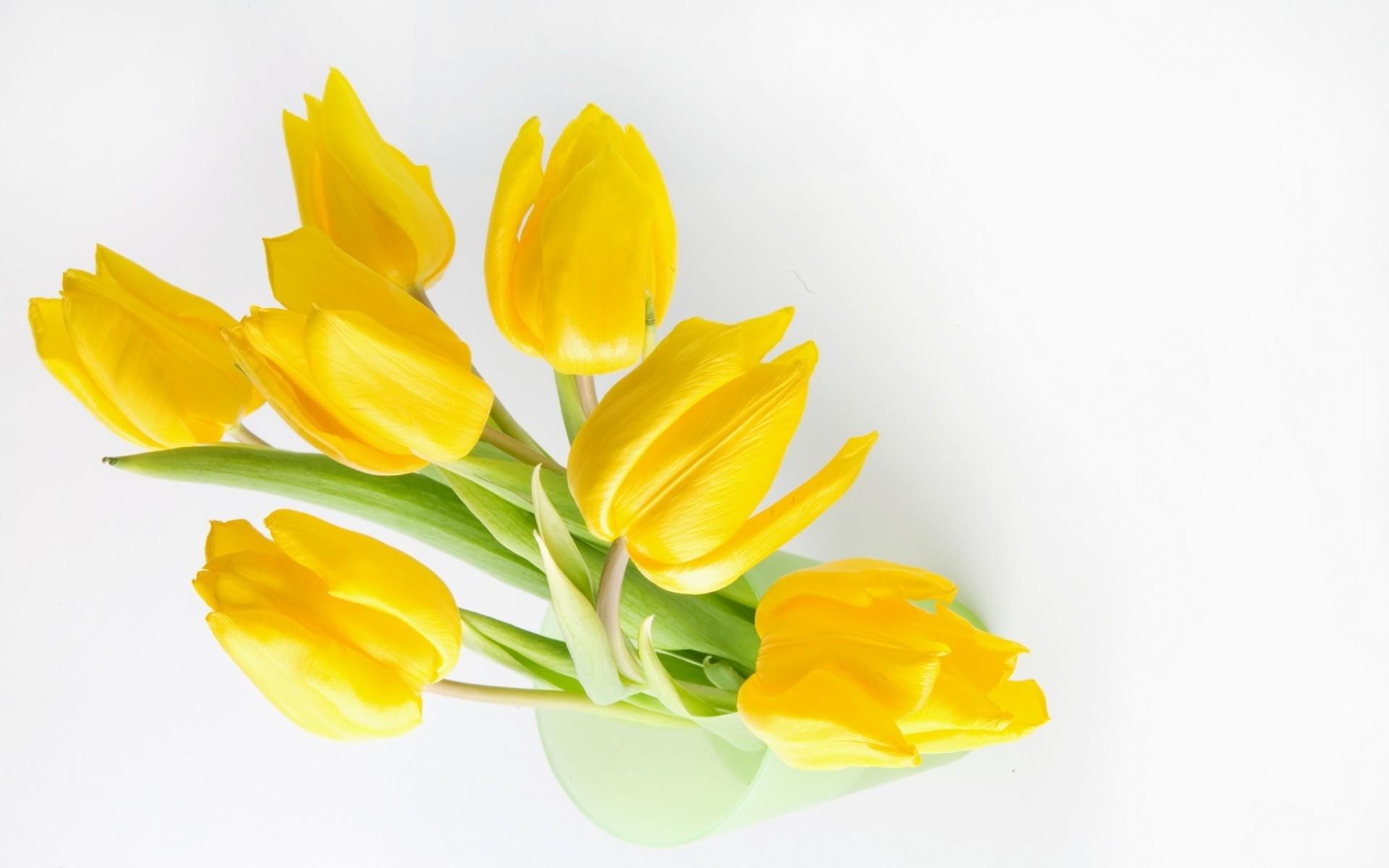 Fondo blanco y flores amarillas - 1920x1200