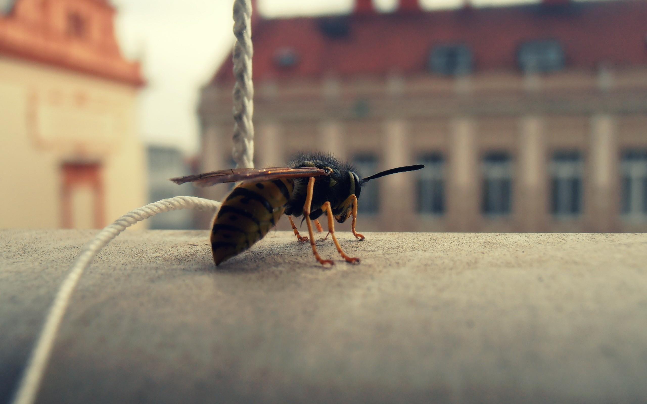 Foto de abeja en macro - 2560x1600