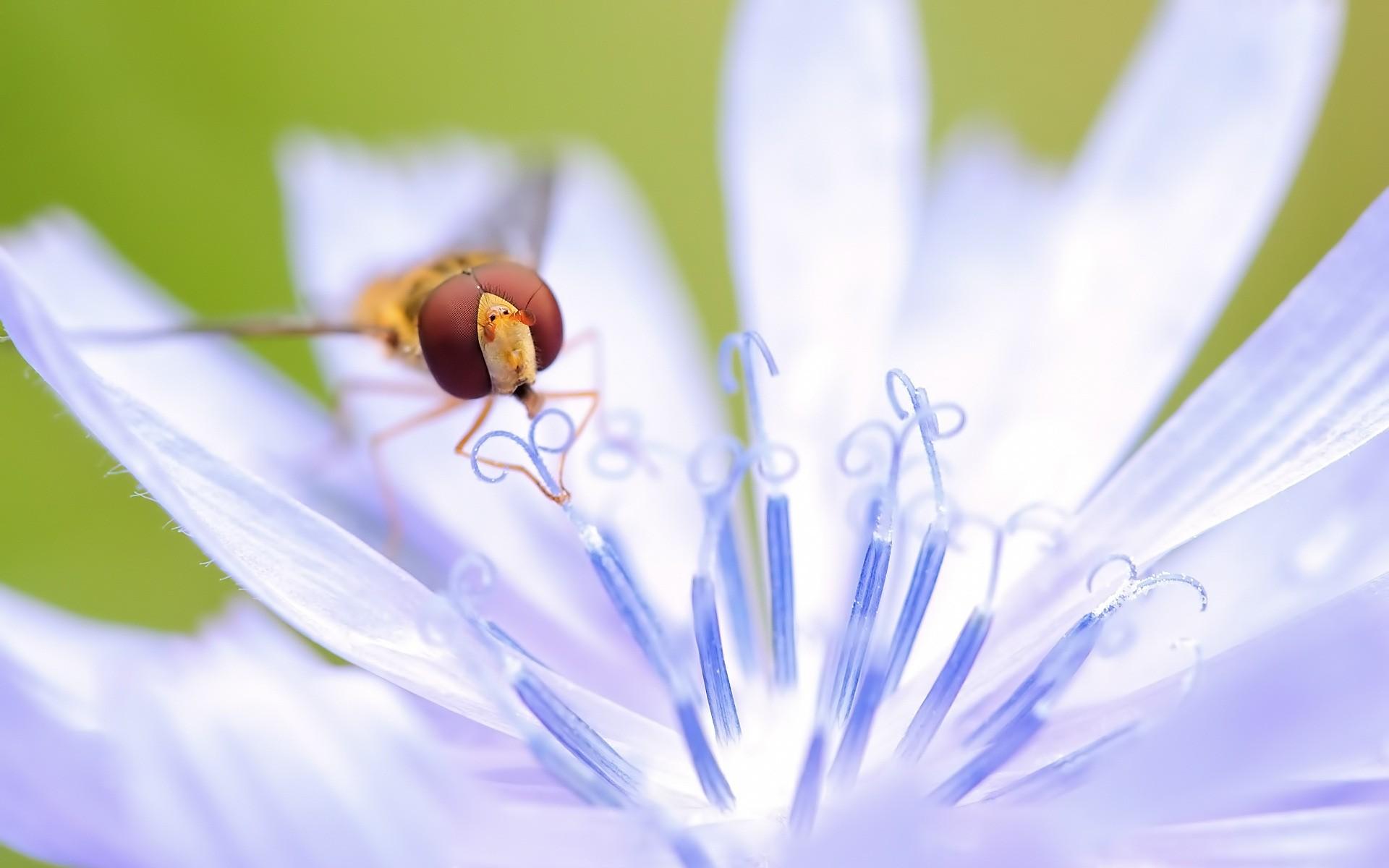 Foto macro de abeja - 1920x1200